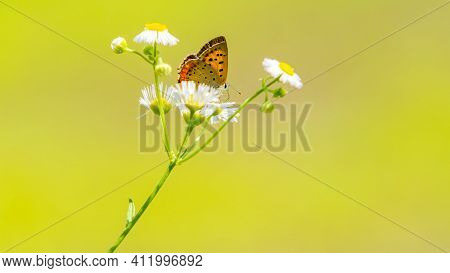 Butterfly On A Flower Wild Flower With Beautiful Butterfly Natural Insect Nature Summer Fly Wildlife