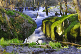 Beautyful river waterfall forest