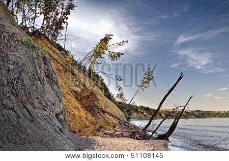 Sliding Down Cliff On Black Sea Coast With Falling Pine Trees. Obzor Beach, Bulgaria.