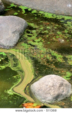 algal slurry at the top of a stagnant pond forming swirl and bloom patterns poster