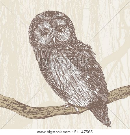 charming owl, hand drawing, vector illustration