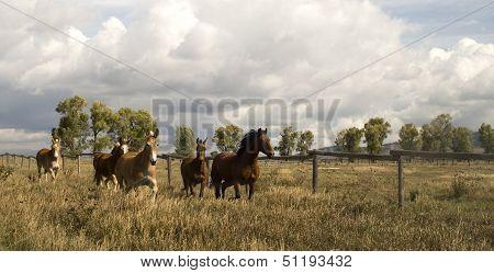 Wild Animal Horses Stampede Running Along Fence Senses Aware