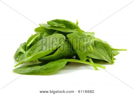 stacked fresh spinach with water drops isolated on white background poster
