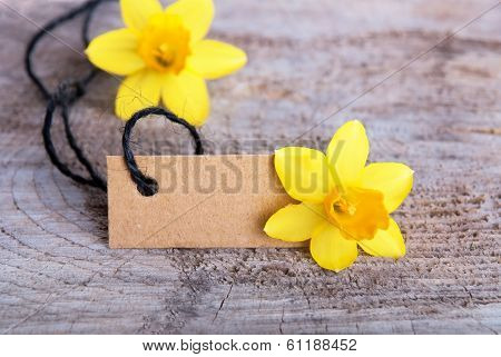 Empty Tag With Narcissus