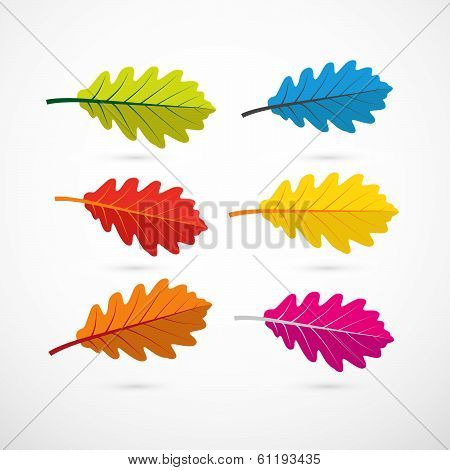 Colorful Vector Oak Leaves Isolated on White Background