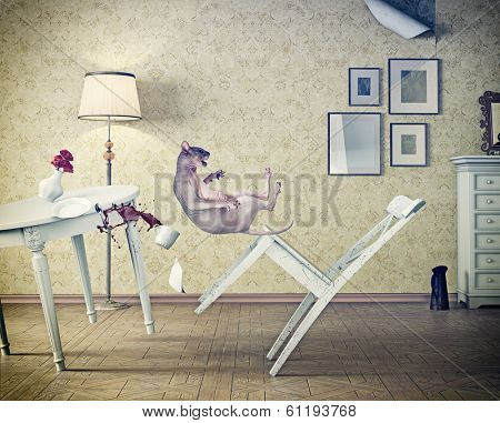 cat falling  in vintage room. photo compilation concept