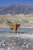 Upper Mustang Region Himalayan Mountains in Nepal. poster