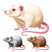 vector illustration of three lab rats on white background poster