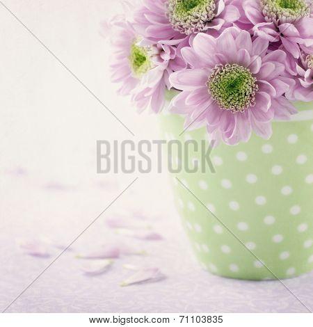 Pink Chrysanthemum Flowers3