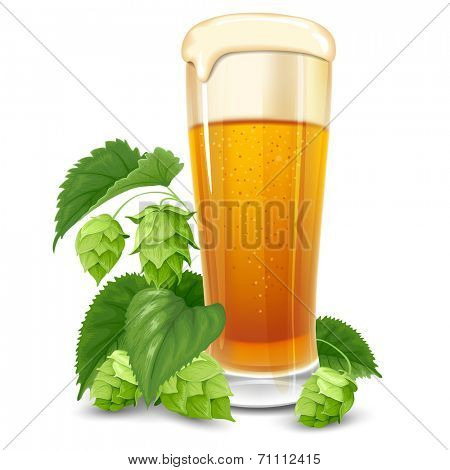 Glass of beer and hops isolated on white background
