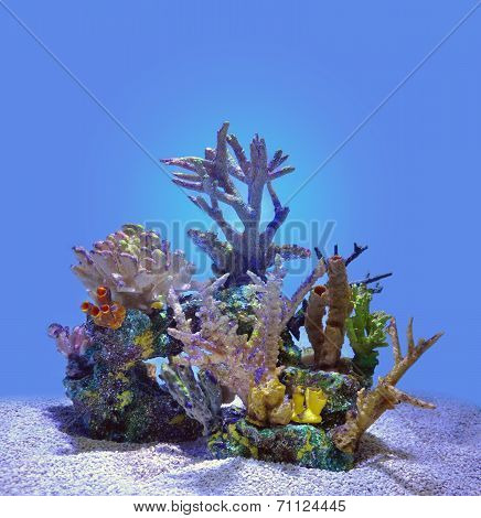 Blue Coral Reef Isolated Under Water