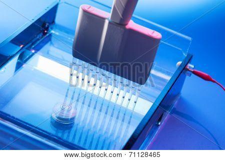 Loading DNA Samples onto an Agarose Gel for Electrophoresis