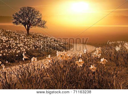 Magic Springlike Landscape