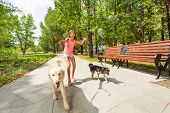 Teenage girl with two naughty dogs on a walk with pets running away off the leash poster