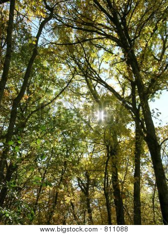 Fall_Trees_Minnesota