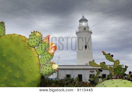 La Mola Lighthouse Formentera Nopal Chumbera