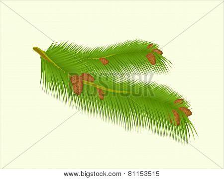 Green branch on background vector stock illustration