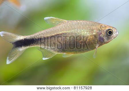 Aquarium Fish close-up