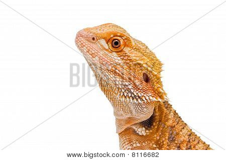 Dragon Portrait