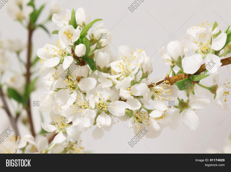 Balmy Breath Spring Image Photo Free Trial Bigstock