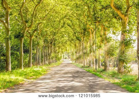 Rural Path With Trees And Light Rays