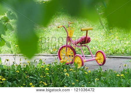 Magenta color kids tricycle with yellow plastic wheels and steel frame on paved path with dandelion