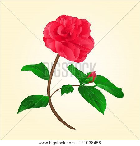 Camellia Japonica Flower With Bud Vektor
