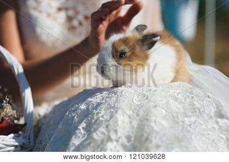 Bride Holds Rabbit On Lap