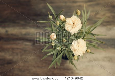 Blooming Carnation In Pot On Wooden Background
