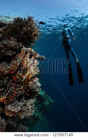 Lady free diver ascending along the vivid coral reef wall in the tropical sea