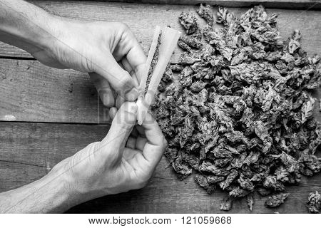 Marijuana Buds And Hande Meking Joint