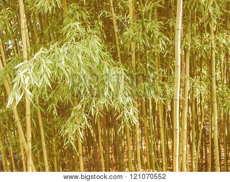 Retro Looking Bamboo Plants