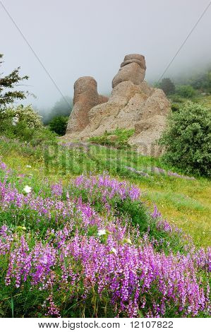 Flowers and rocks in a fog