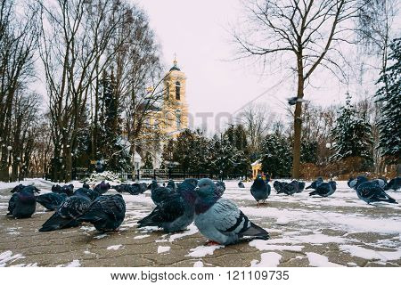 Peter and Paul Cathedral in Gomel, Belarus. Winter season