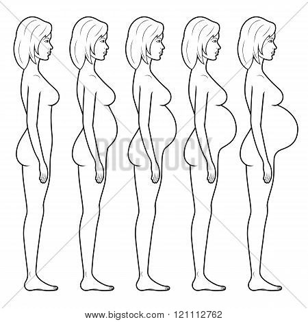 Illustration Of A Pregnant Woman's Figure