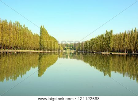 Row of poplars and their reflections in the water.