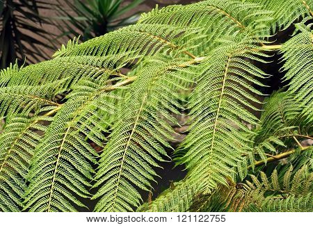 a fern vegetation in the island of Madeira (Portugal)