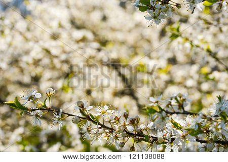 Blossom flower on a springtime in natural light