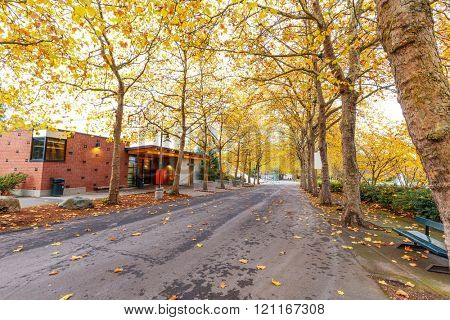 empty road,on which fallen leaves cover,through forest in autumn day
