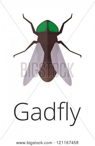 Gadgly skin parasite insect vector bug. Bug insect gadgly isolated on white background. Insect skin parasite biology bugs. Skin parasite gadgly flying bugs. Gadgly bugs.