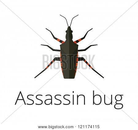 Assassin bug insect vector illustration. Close Up of a poisonous