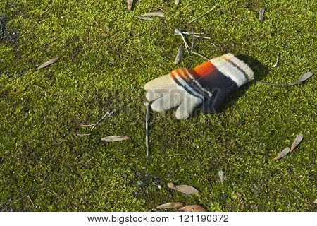 Lost Knitted Child's Glove or Mitten on Green Mossy Grass
