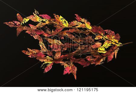drawing bouquet of dried, desiccated, pressed leaves