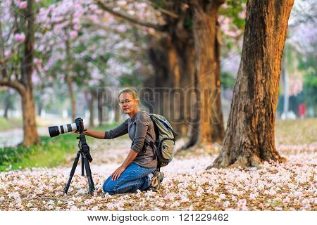 Tourist woman with her camera for taking picture of blooming Pink Trumpet (Tabebuia rosea) trees at Kamphaeng Saen, Nakhon Pathom province, Thailand