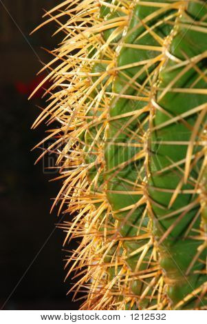 Golden Barrel Cactus Profile