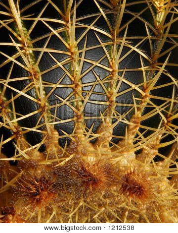 Thorny Alien Hand And Fingers