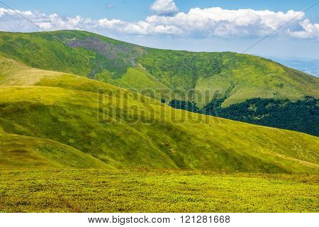 wild grass on Carpathian highland meadow at the top of the mountain range
