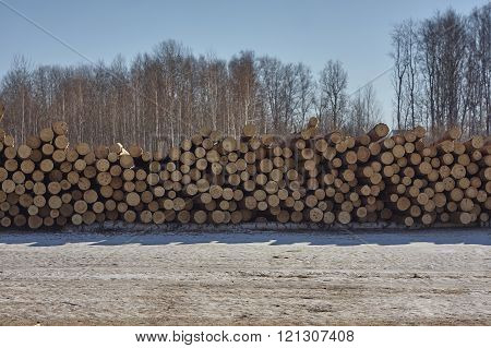 stack of pine trees