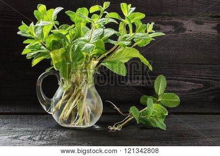 Fresh Sprigs Of Mint In A Jug