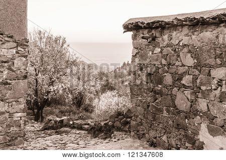 Fikardou village scene with blooming almond trees- sepia toned